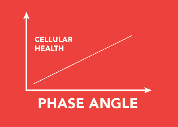 Your Body and You: A Guide to Phase Angle